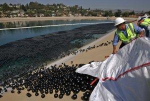 В бассейн Ivanhoe в Лос-Анджелесе было выпущено приблизительно 400 000 черных пластмассовых 4-дюймовых шаров для защиты воды от солнечных лучей. 9 июня 2008 год. Irfan Khan/AP