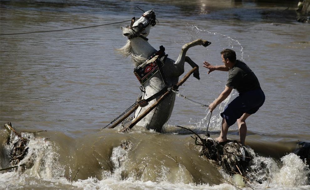 Мужчина в косовском городе Стимле, к югу от столицы Приштины, пытается спасти свою лошадь. 26 марта 2008 год. REUTERS/Hazir Reka