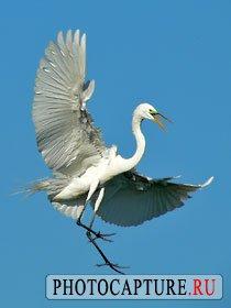 Съемка птиц в полете